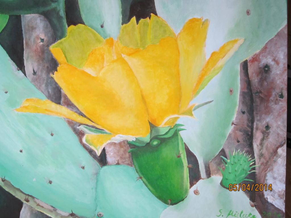 Kaktusblüte gelb
